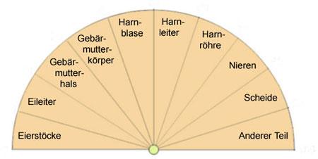 Pendeltafel zu den weibl. Harn- und Geschlechtsorganen