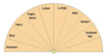 Pendeltafel zum Kreislaufsystem