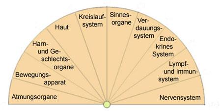 Pendletafel für die Bestimmung von Körperfunktionen